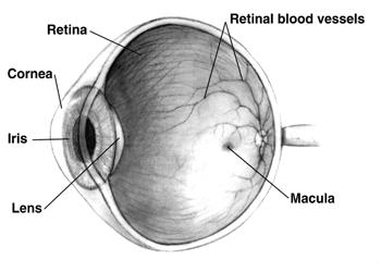 What's the current state of stem cell therapy for retinal damage?