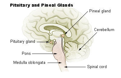 How can you detoxify the pineal gland?