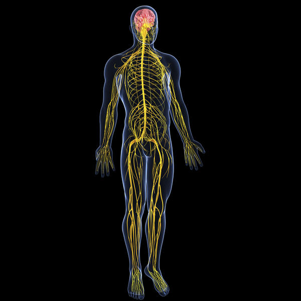 What are five diseases that affect the central nervous system?