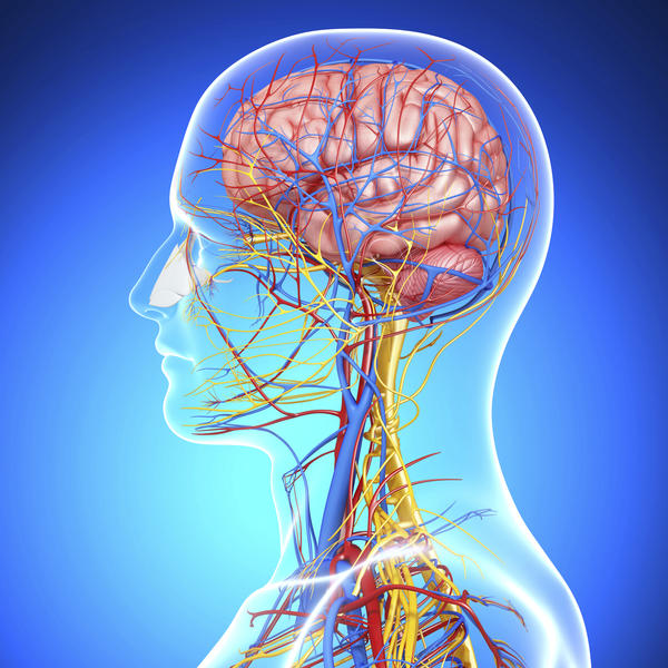 What are the effects of nerve system damage?