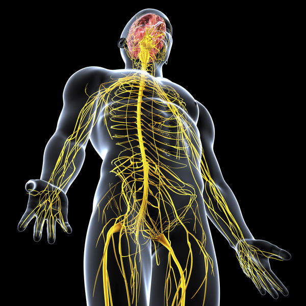 Is Huntington's disease a disorder of the central nervous system?