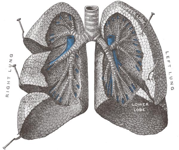 How is bronchial pneumonia transmitted from person to person?