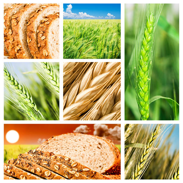 Which food has the mostest fiber?