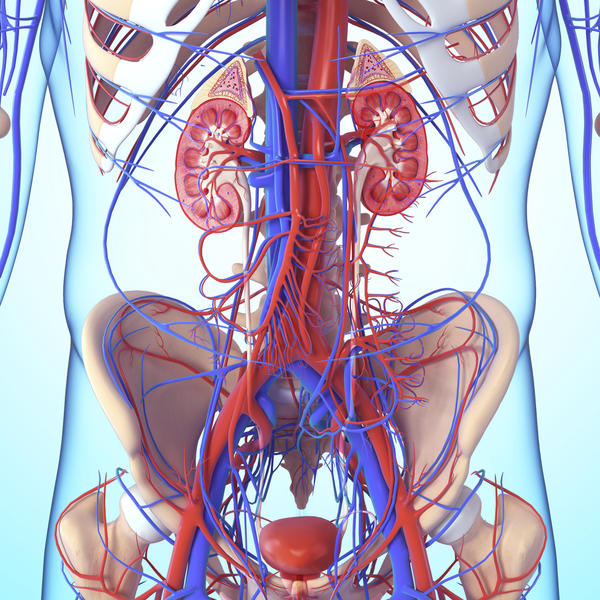 Why is the vascular system important?