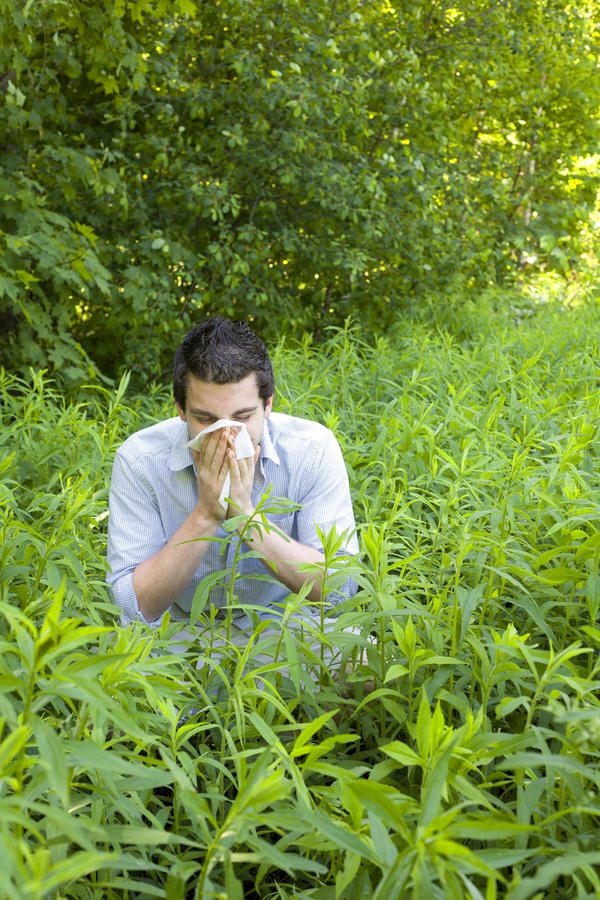 Which microbe causes hay fever?