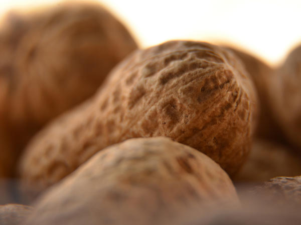 For what length of time can peanut allergy symptoms last?