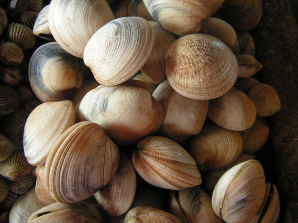 Shellfish allergy. Can I eat mussels?