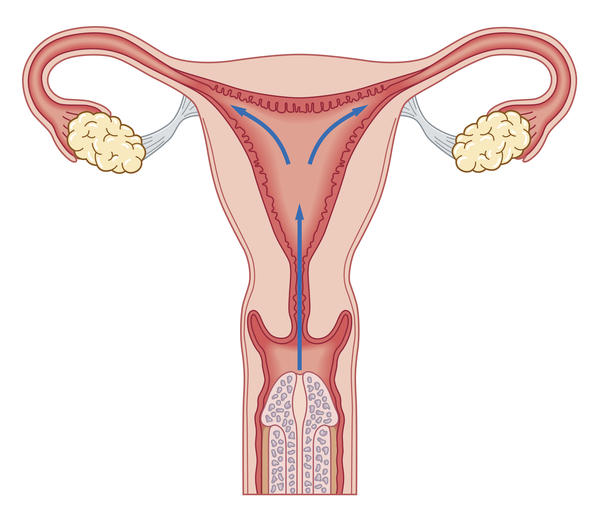I have a cystic structure in my uterus, what could be the reason for it?