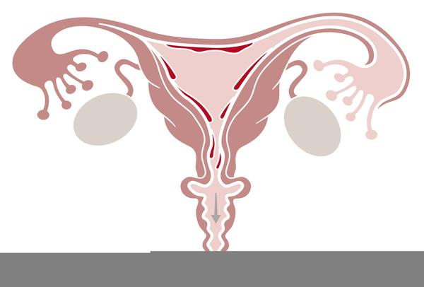After reading transvaginal ultrasound report, no mention of my cervix, why could that be?