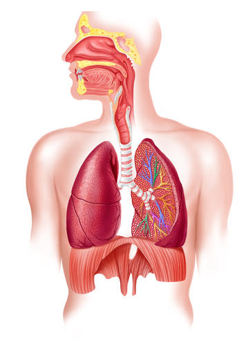 What is the difference between pneumonia and pulmonary edema?