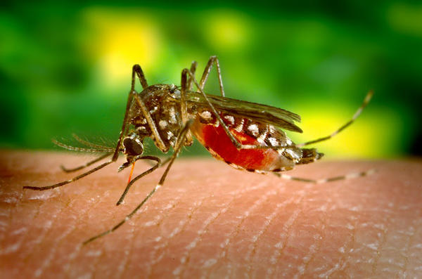 What are the causes of yellow fever?