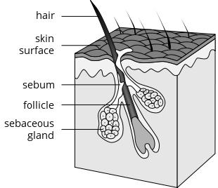 If someone has folliculitis, can the bacteria come from the inside of the body and work it's way out to infect follicle or is it always from outside?