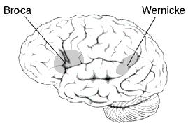 What role does the dominant parietal lobe have in speech and speech formation?