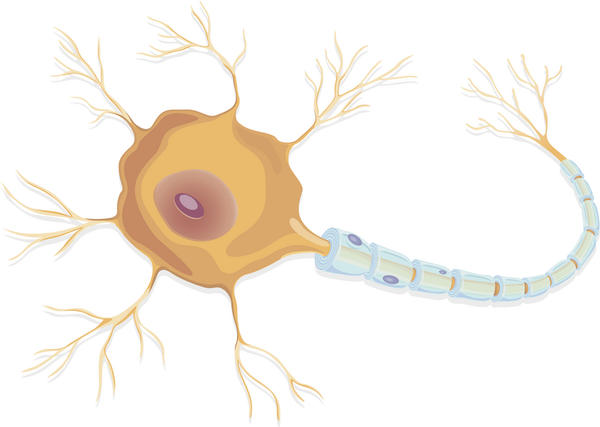 What are the symptoms of neuropathy? I have stinging in various places.