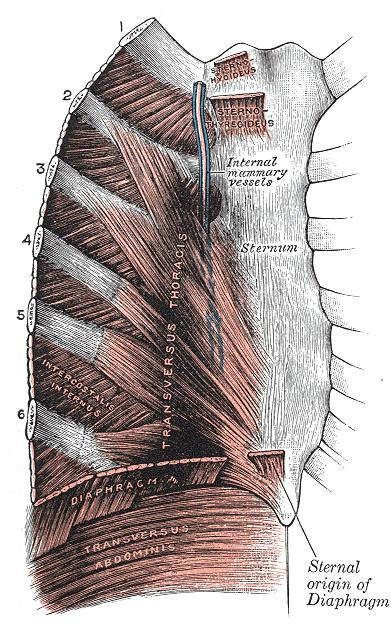 What's the name of an inflammation of the muscles near your rib cage?