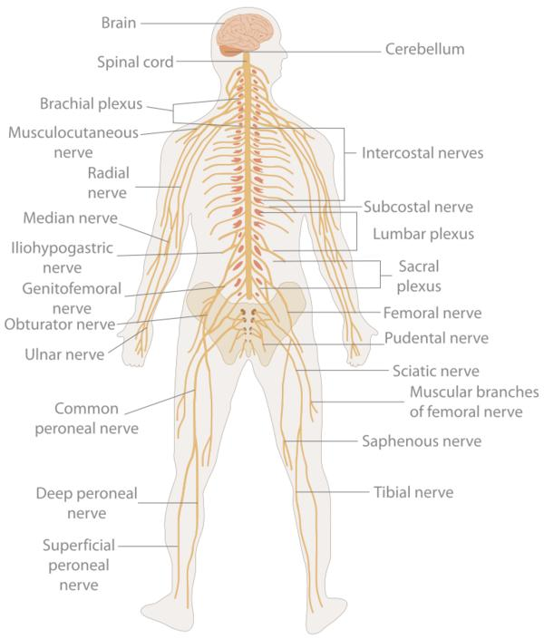 Do you have information on nerve blocks?