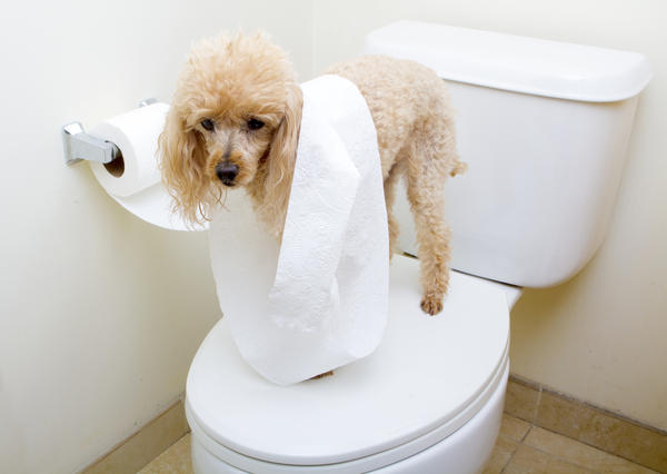 What are the symptoms of fecal impaction?
