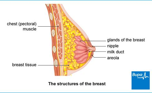 I was wondering what are some signs of breast cancer?