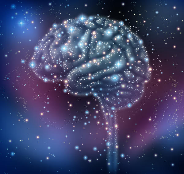 What is the biggest part of the human brain?