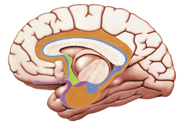 How are fine motor skills controlled by the brain?