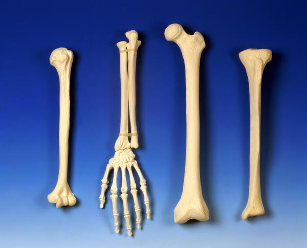What are the major symptoms of a tail bone injury?