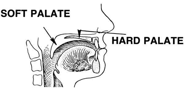 What dangles down from my hard palate?