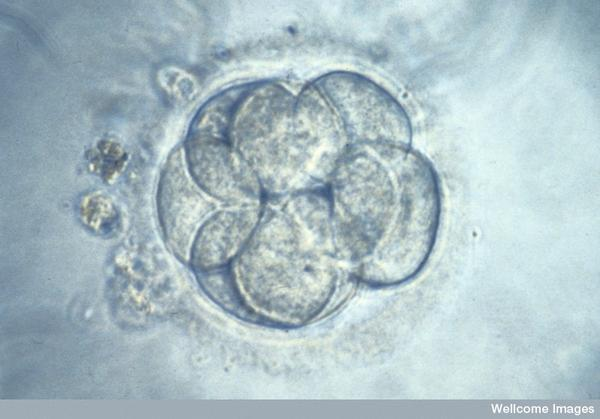 How many chances of getting pregnant with ivf?