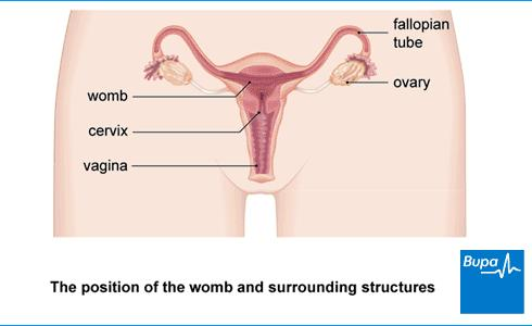 Why do ovarian cyst cause vaginal cramps?