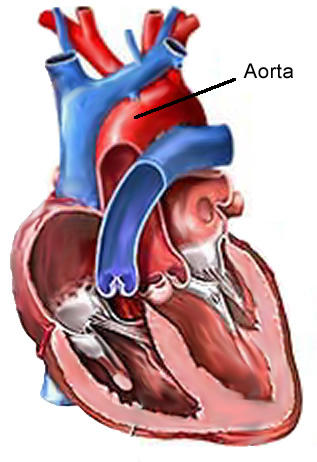 Can you tell me how is a diagnosis of aortic stenosis made?