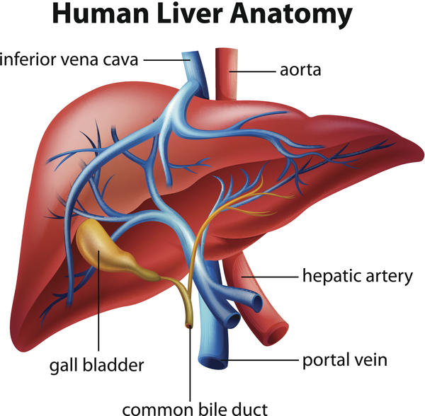 I was just wondering how can liver dysfunction cause bleeding disorders?