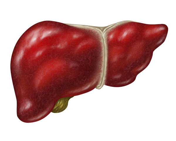 What is the meaning of liver normal in size but homogenous increase in echopattern?
