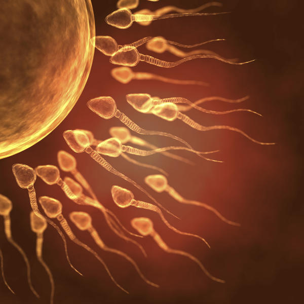 Are conception and implantation interchangeable? Trying to narrow down conception/ovulation dates. Help me better understand?