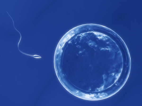 What can increase my chances of conception?