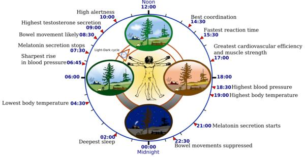 How does travel change your body's circadian rhythm?
