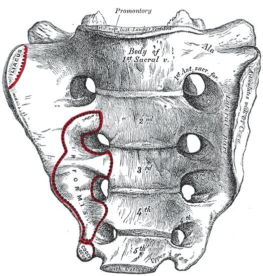 What is the definition or description of: sacrum?