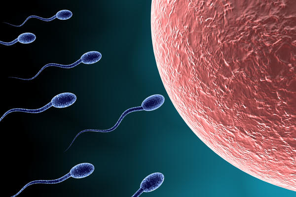 How long can sperm live? And where do they wait/live when inside the female?