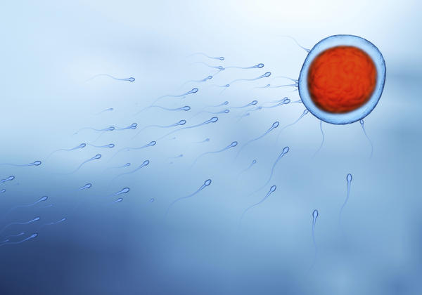 Does A Woman Feel When Sperm Is Fertilizing The Egg -3527