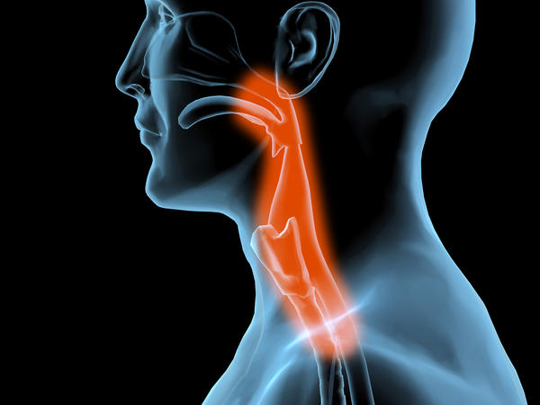 What is located at the bottom of the pharynx?
