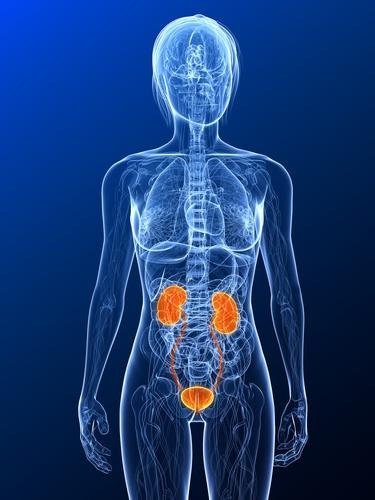 What are all symptoms of a urinary tract infections?