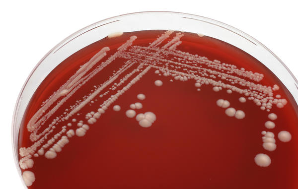What is candida yeast?