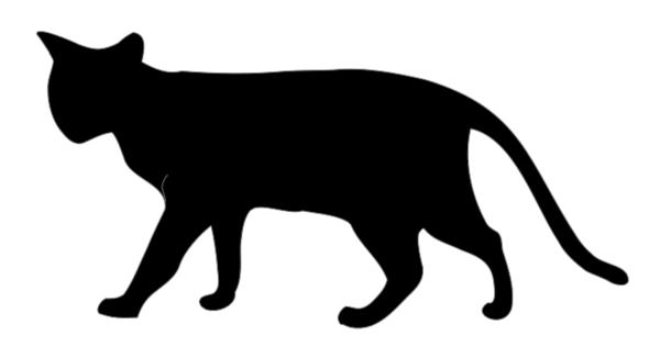 Could you get rabies/other diseases from a cat bite?