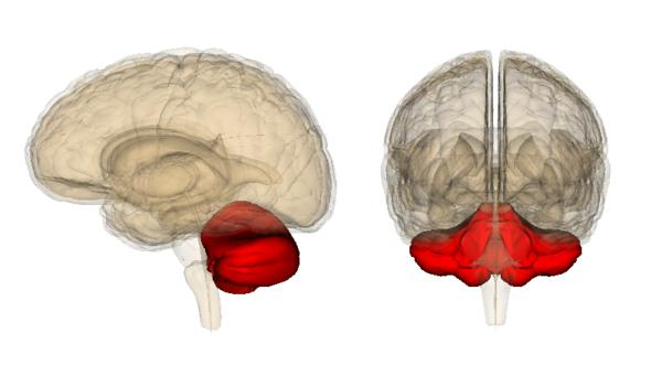Is your memory function located on the left side of the brain?