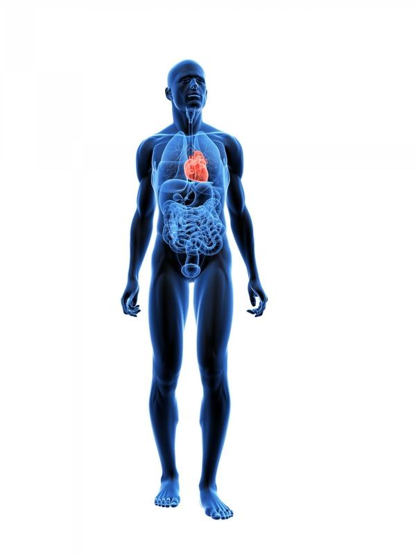 What is the main difference between bronchial pneumonia and just pneumonia?