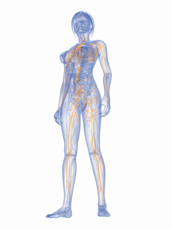 Where in the body are lymph nodes not located?