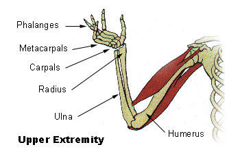 What is the definition or description of: lower extremity?