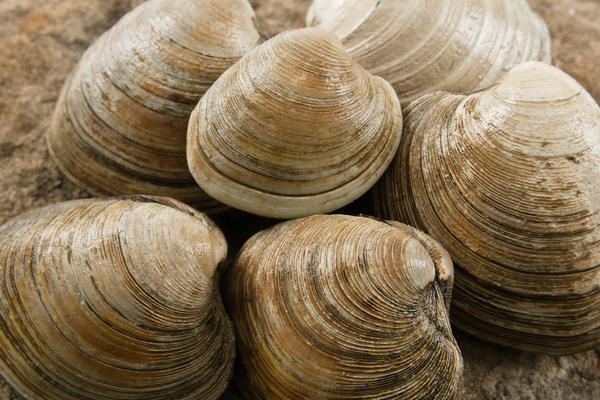 Should a patient with shellfish allergies take celebrex (celecoxib)?