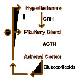 How do you diagnose adrenal fatigue / hypoadrenia?