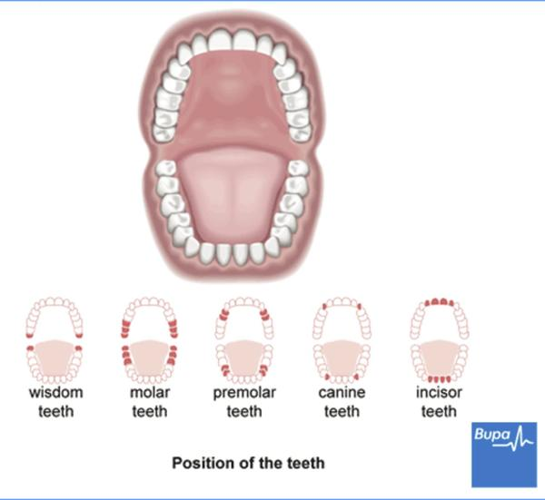Are there any safe mouth guards for false teeth?
