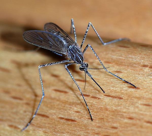 When there is an outbreak of west nile virus, how is the population of infected mosquitoes exterminated?
