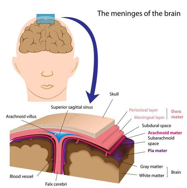 What are the effects of a tumor in the membrane that surrounds the brain and spinal cord?